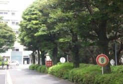 Immediate Area