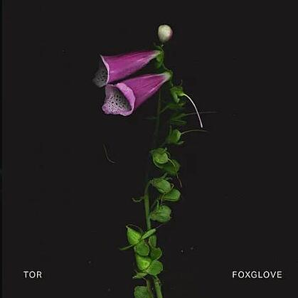 TorFoxglobe